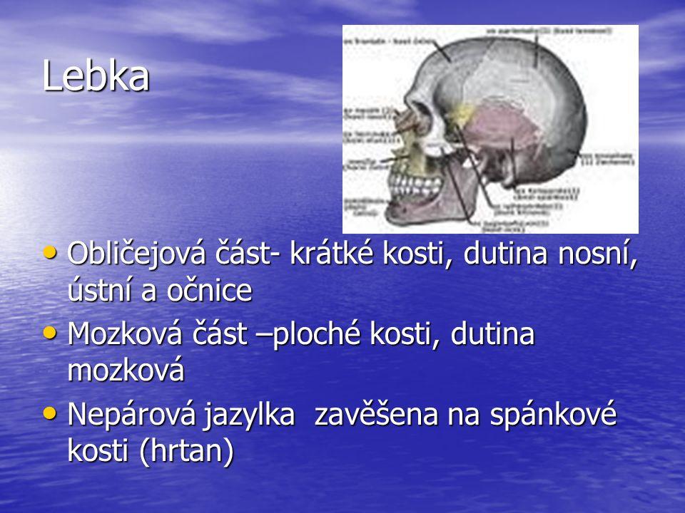 Lebka Obličejová část- krátké kosti, dutina nosní, ústní a očnice