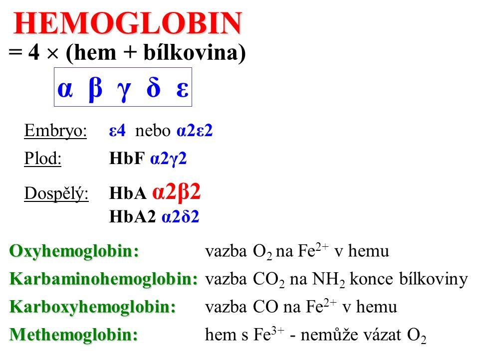 HEMOGLOBIN α β γ δ ε = 4  (hem + bílkovina) Embryo: ε4 nebo α2ε2