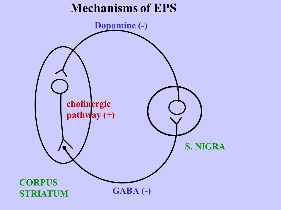 Mechanisms of EPS Dopamine (-) cholinergic pathway (+) S. NIGRA