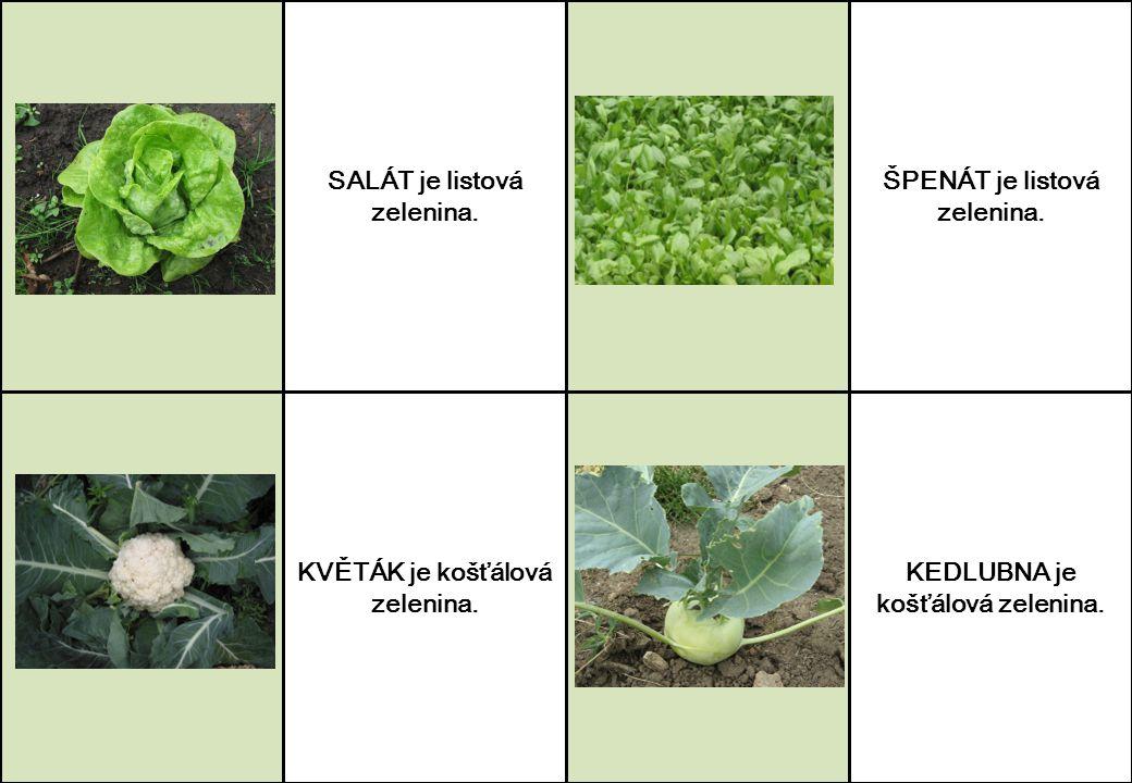 SALÁT je listová zelenina. ŠPENÁT je listová zelenina.