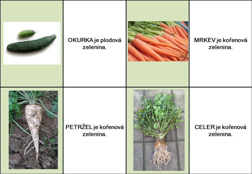 OKURKA je plodová zelenina. MRKEV je kořenová zelenina.