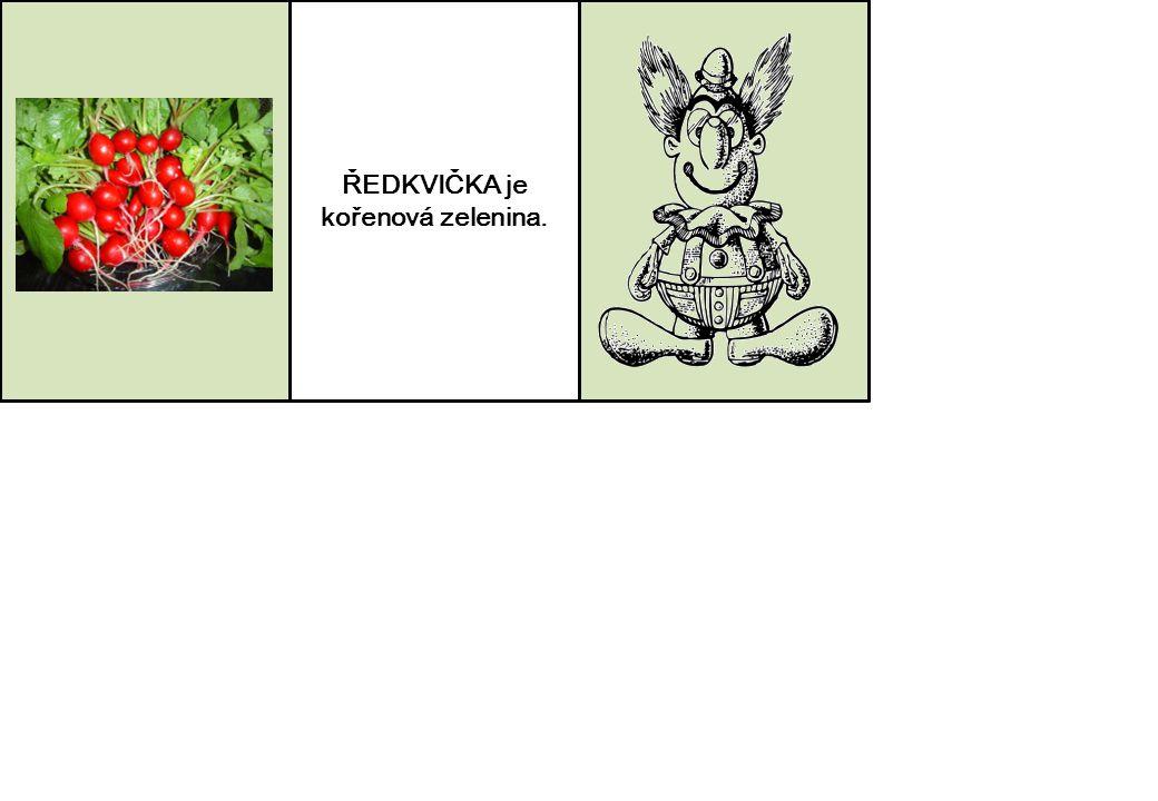 ŘEDKVIČKA je kořenová zelenina.