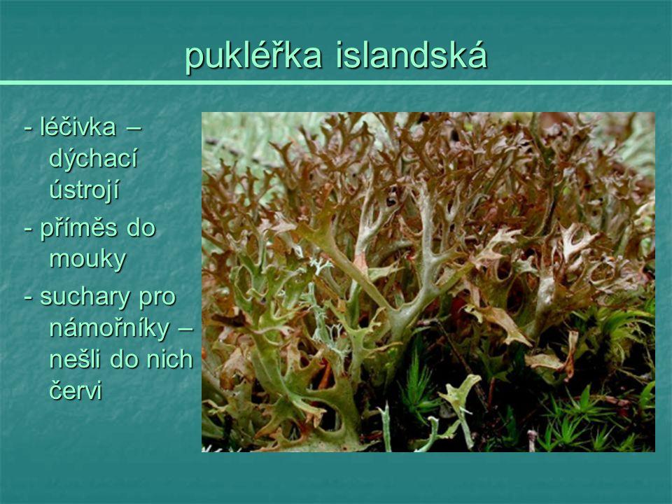 pukléřka islandská - léčivka – dýchací ústrojí - příměs do mouky