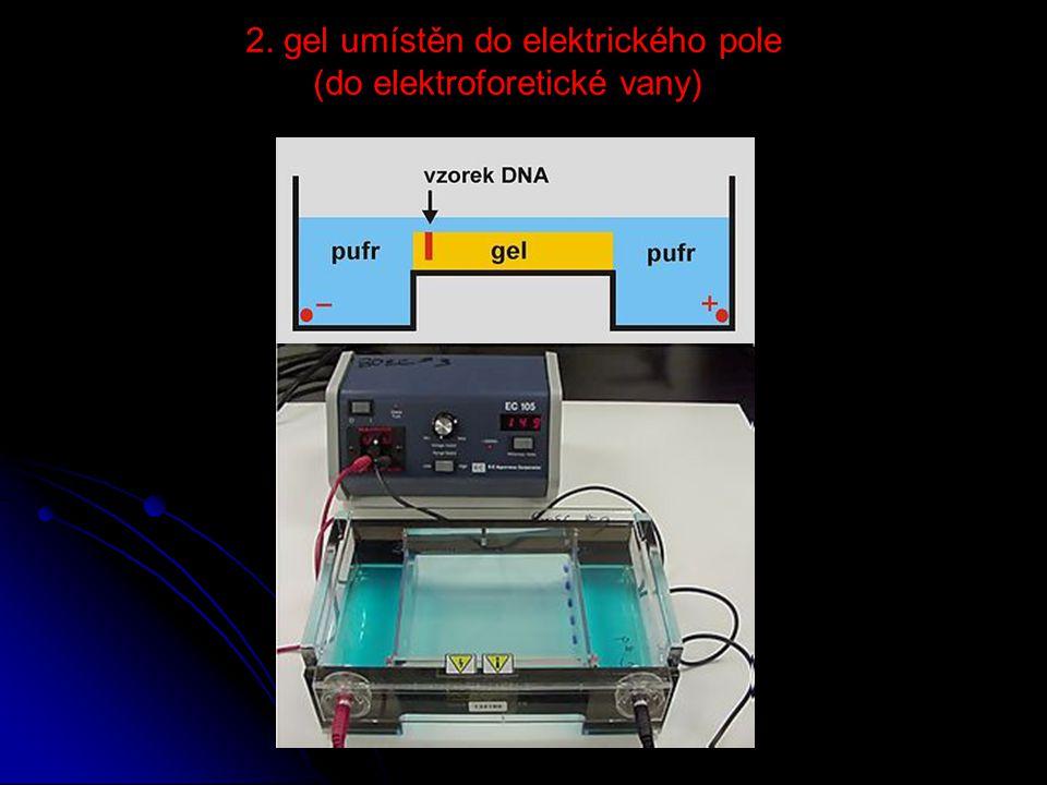 2. gel umístěn do elektrického pole