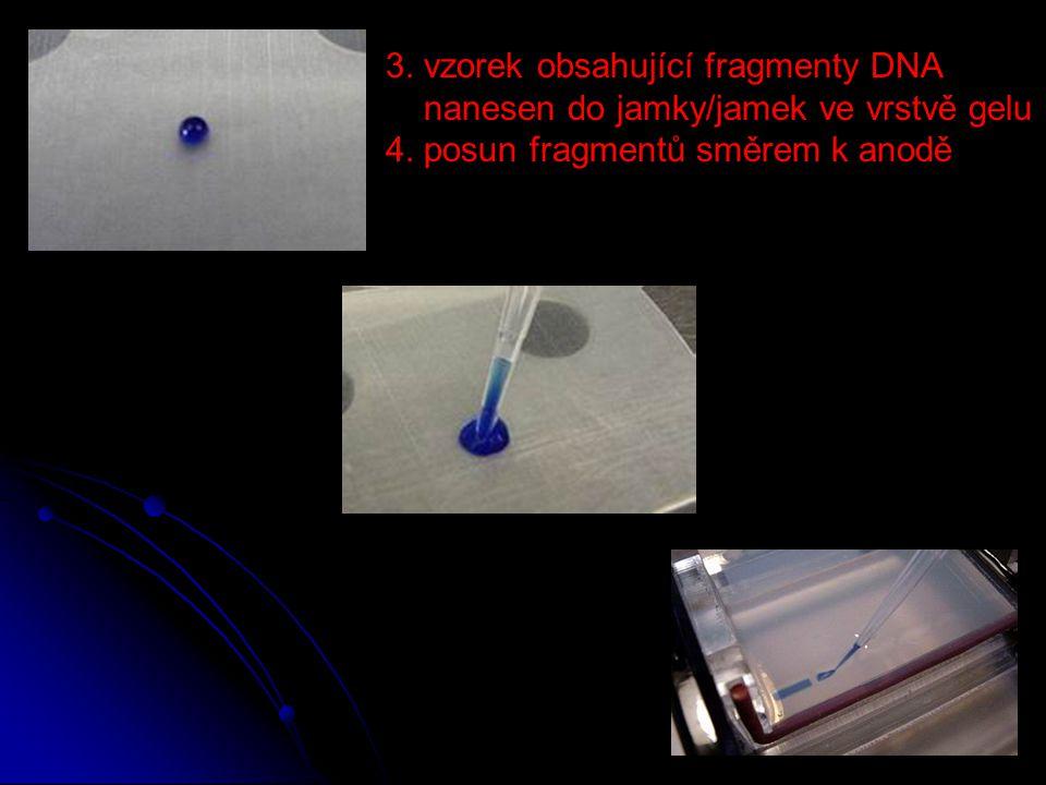 3. vzorek obsahující fragmenty DNA