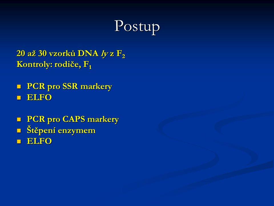 Postup 20 až 30 vzorků DNA ly z F2 Kontroly: rodiče, F1