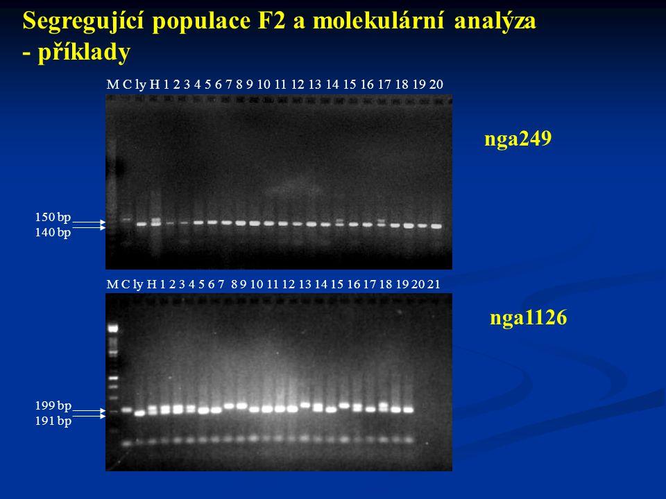 Segregující populace F2 a molekulární analýza - příklady
