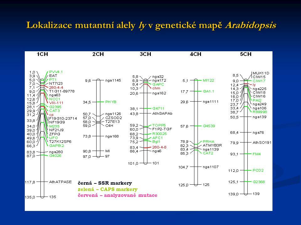 Lokalizace mutantní alely ly v genetické mapě Arabidopsis