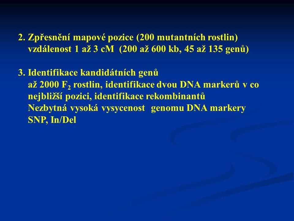 2. Zpřesnění mapové pozice (200 mutantních rostlin)