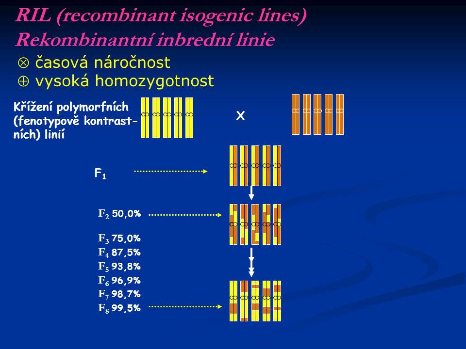 RIL (recombinant isogenic lines) Rekombinantní inbrední linie