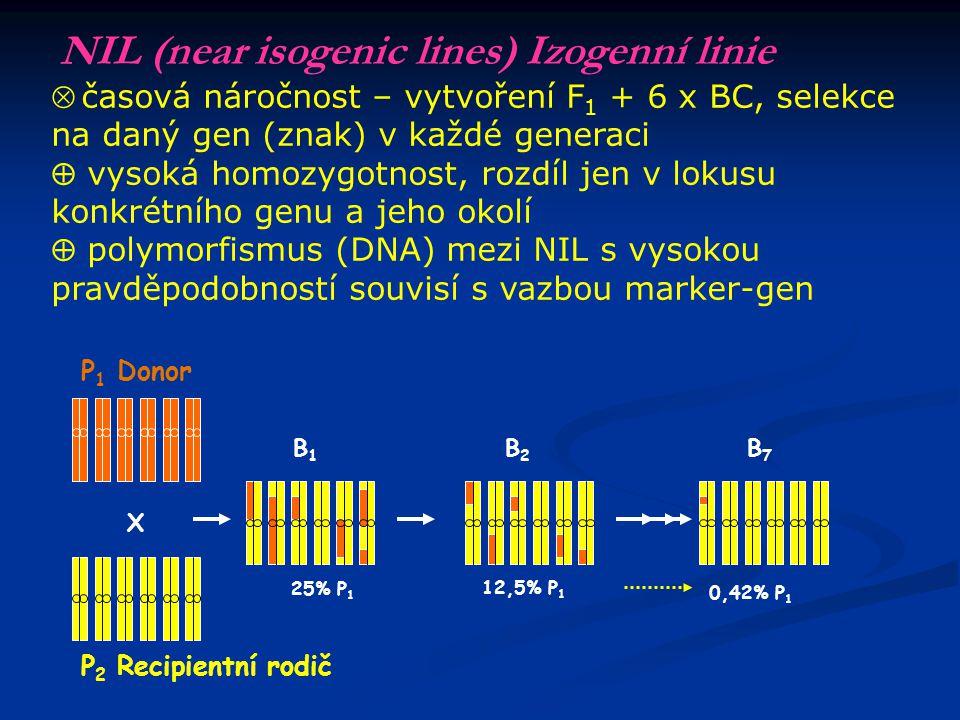 NIL (near isogenic lines) Izogenní linie