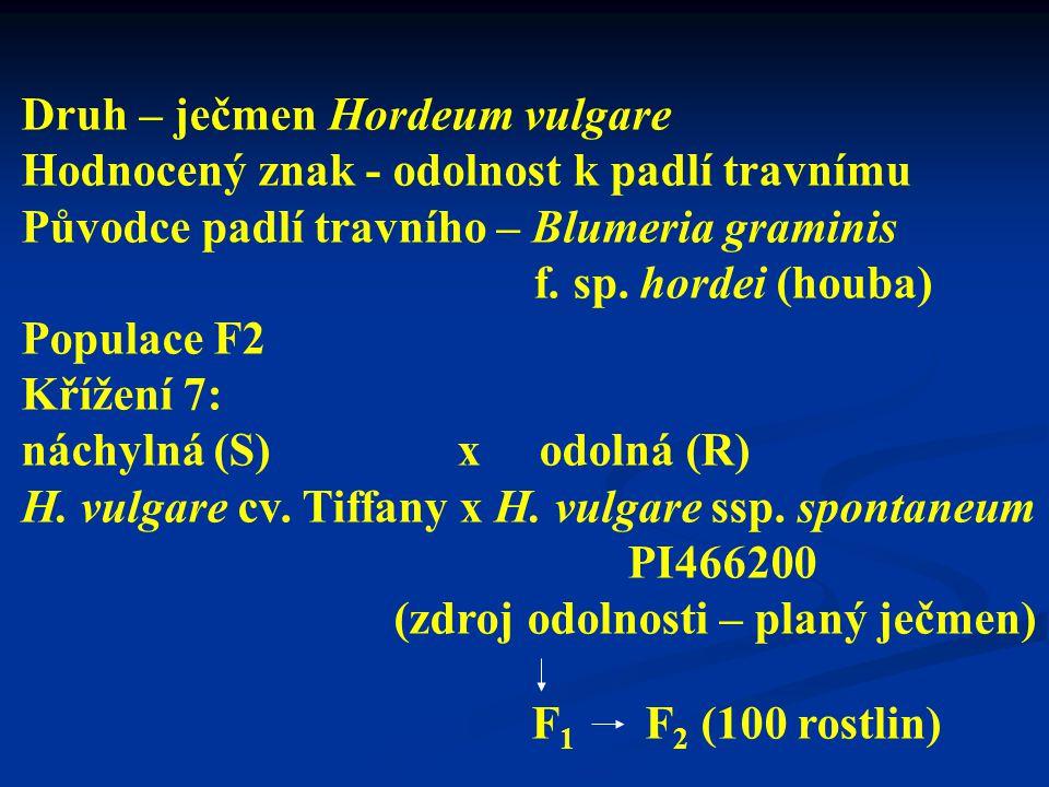 Druh – ječmen Hordeum vulgare