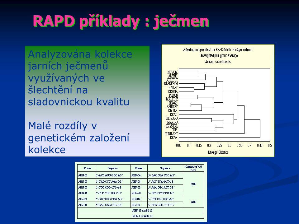 RAPD příklady : ječmen Analyzována kolekce jarních ječmenů využívaných ve šlechtění na sladovnickou kvalitu.