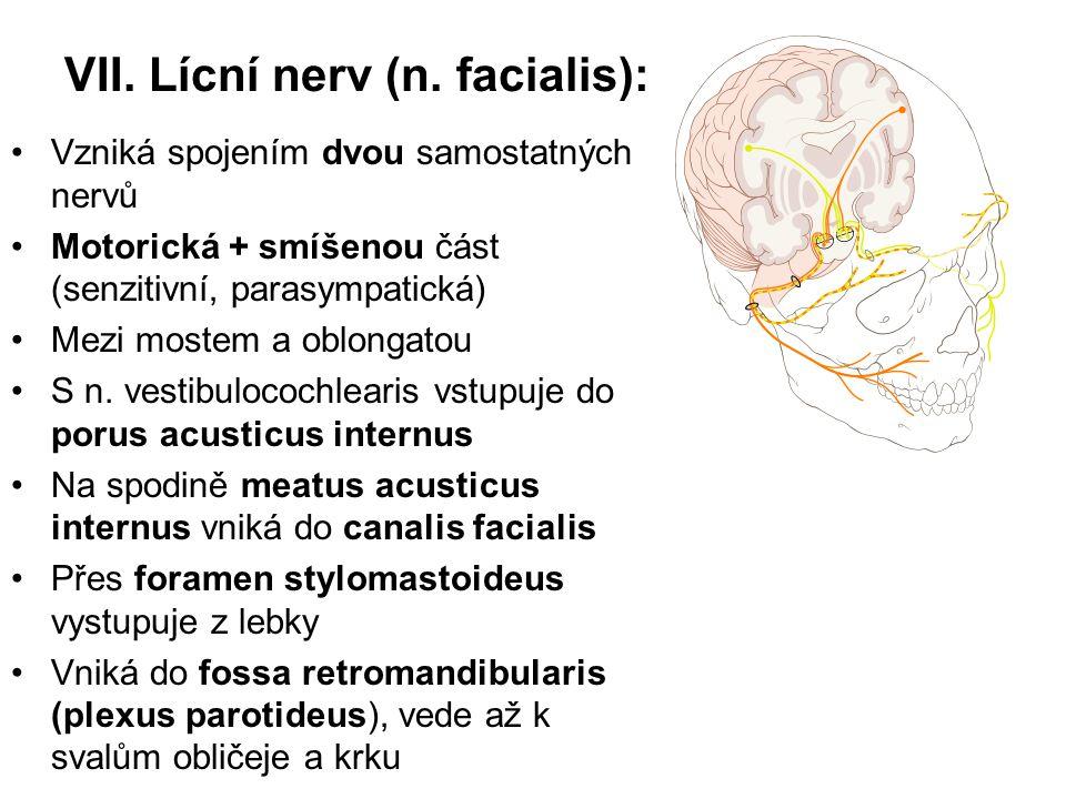 VII. Lícní nerv (n. facialis):