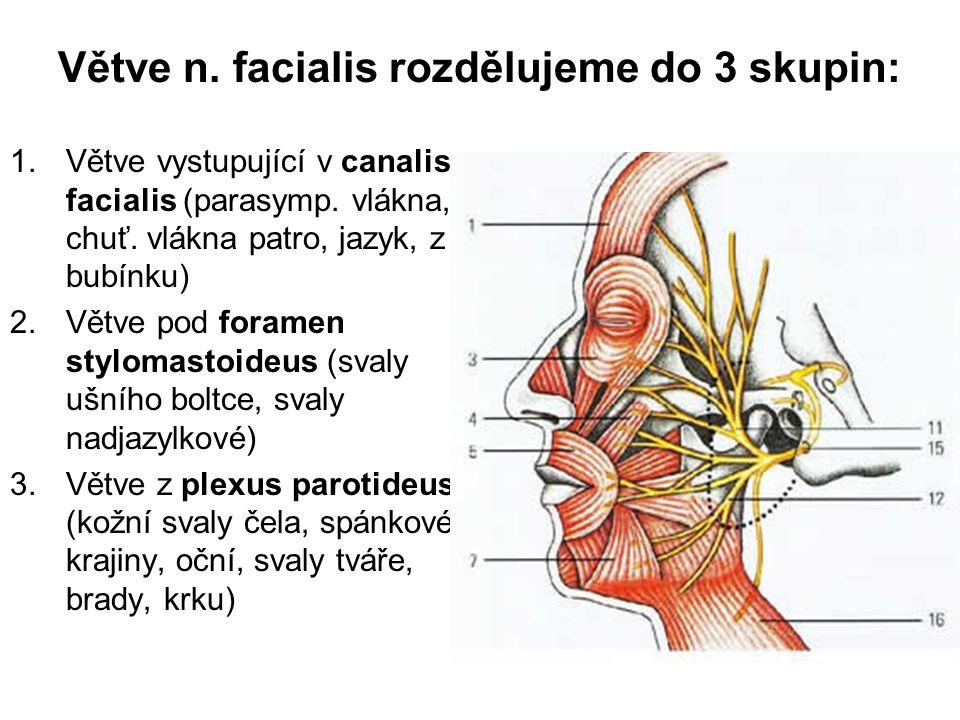 Větve n. facialis rozdělujeme do 3 skupin: