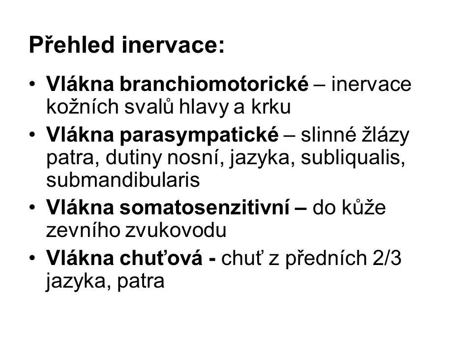 Přehled inervace: Vlákna branchiomotorické – inervace kožních svalů hlavy a krku.