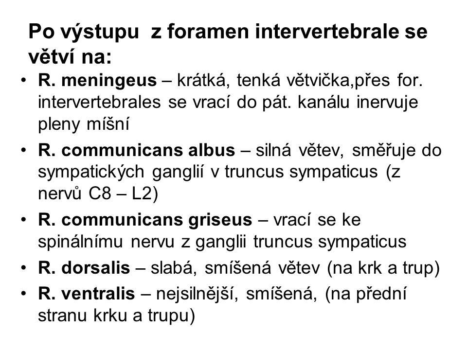 Po výstupu z foramen intervertebrale se větví na: