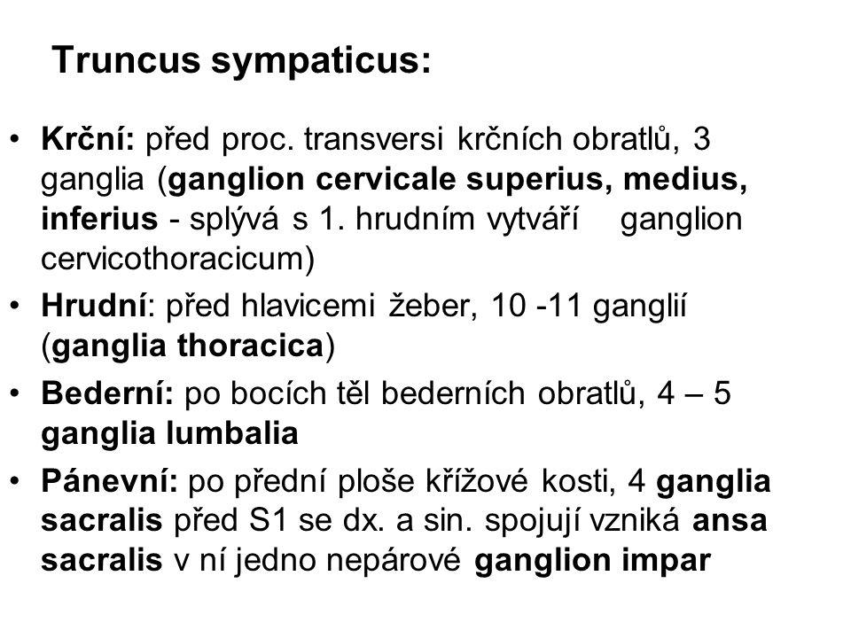 Truncus sympaticus: