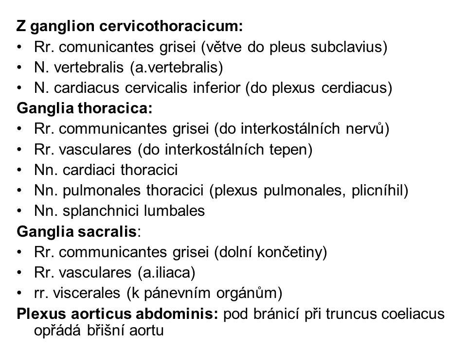 Z ganglion cervicothoracicum:
