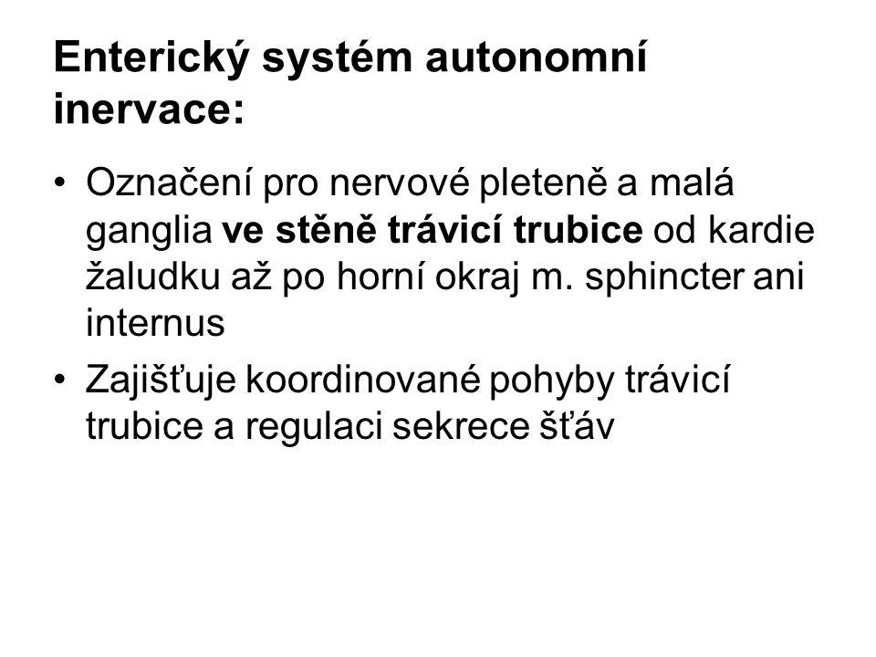 Enterický systém autonomní inervace: