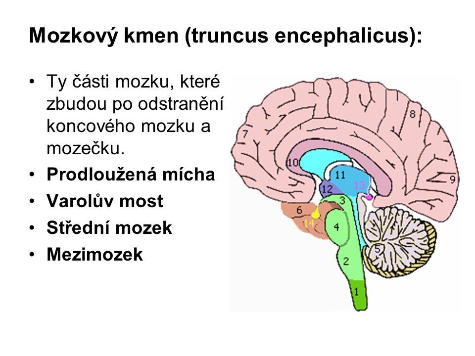 Mozkový kmen (truncus encephalicus):