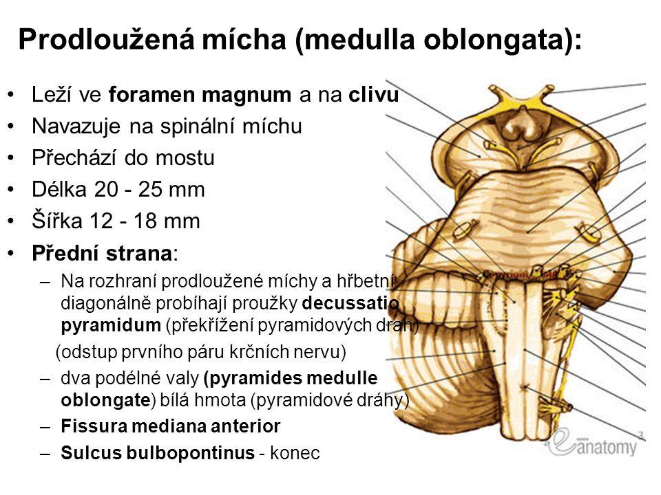 Prodloužená mícha (medulla oblongata):