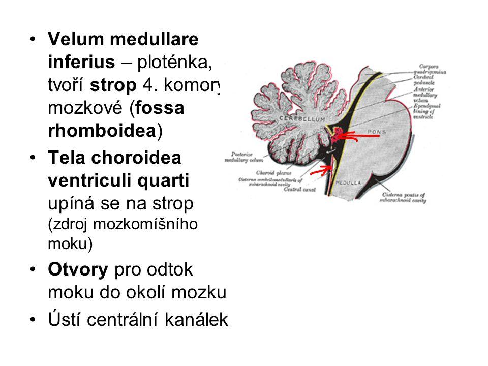 Velum medullare inferius – ploténka, tvoří strop 4
