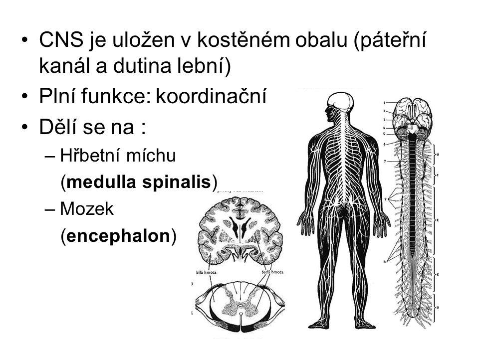 CNS je uložen v kostěném obalu (páteřní kanál a dutina lební)