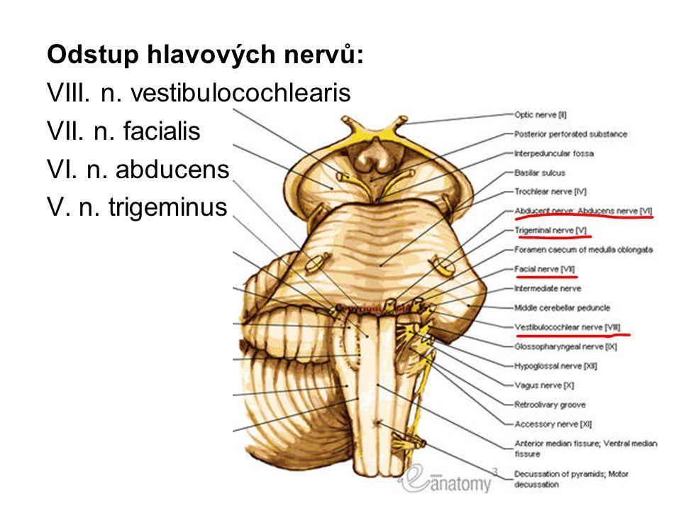 Odstup hlavových nervů: