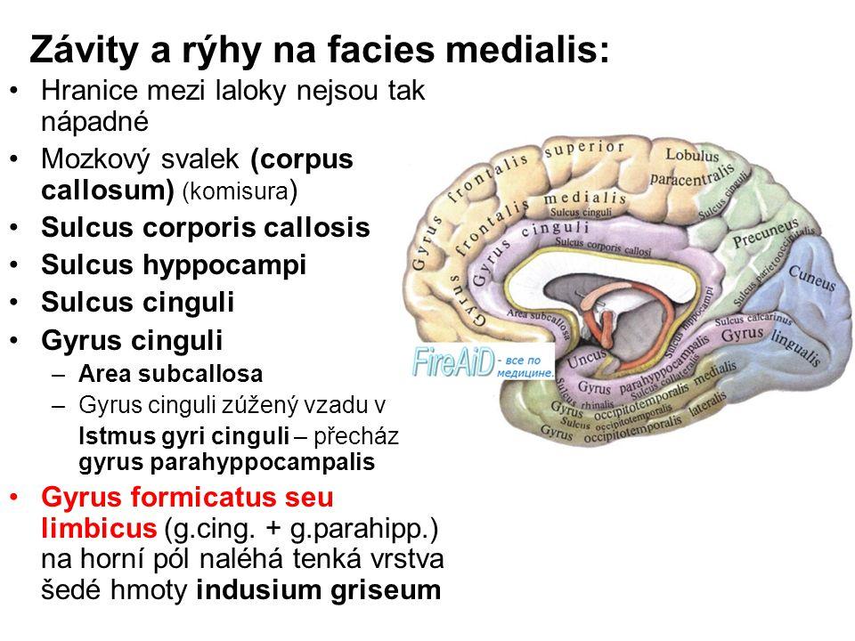 Závity a rýhy na facies medialis: