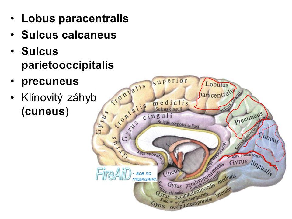 Lobus paracentralis Sulcus calcaneus Sulcus parietooccipitalis precuneus Klínovitý záhyb (cuneus)