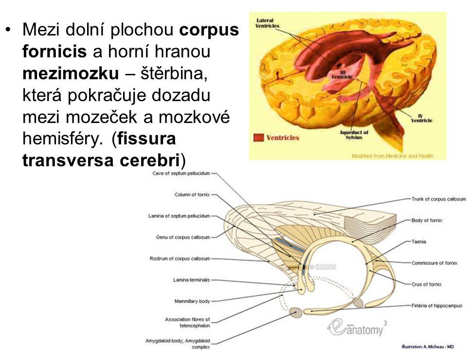 Mezi dolní plochou corpus fornicis a horní hranou mezimozku – štěrbina, která pokračuje dozadu mezi mozeček a mozkové hemisféry.