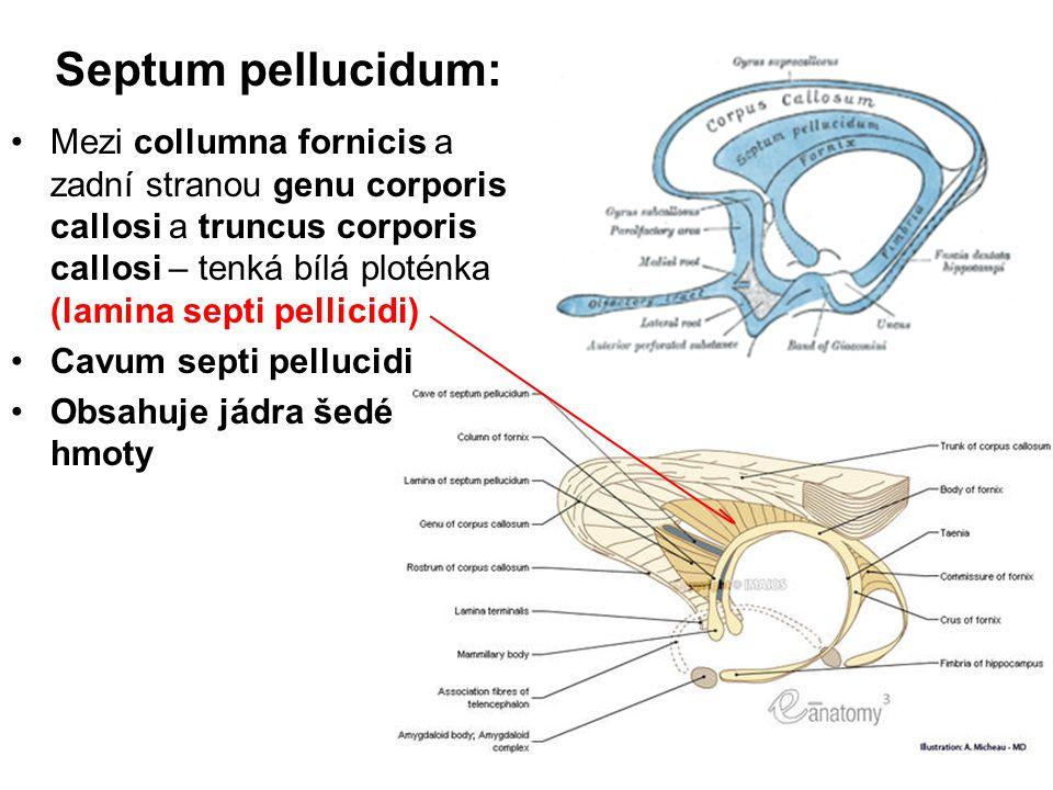Septum pellucidum: