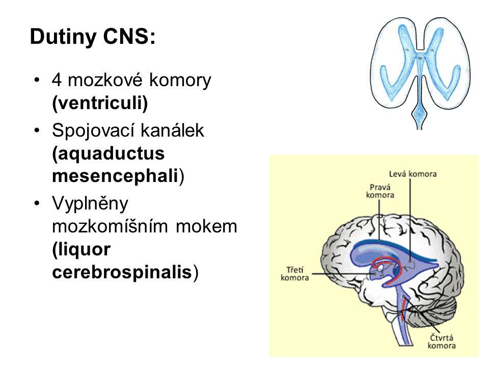 Dutiny CNS: 4 mozkové komory (ventriculi)