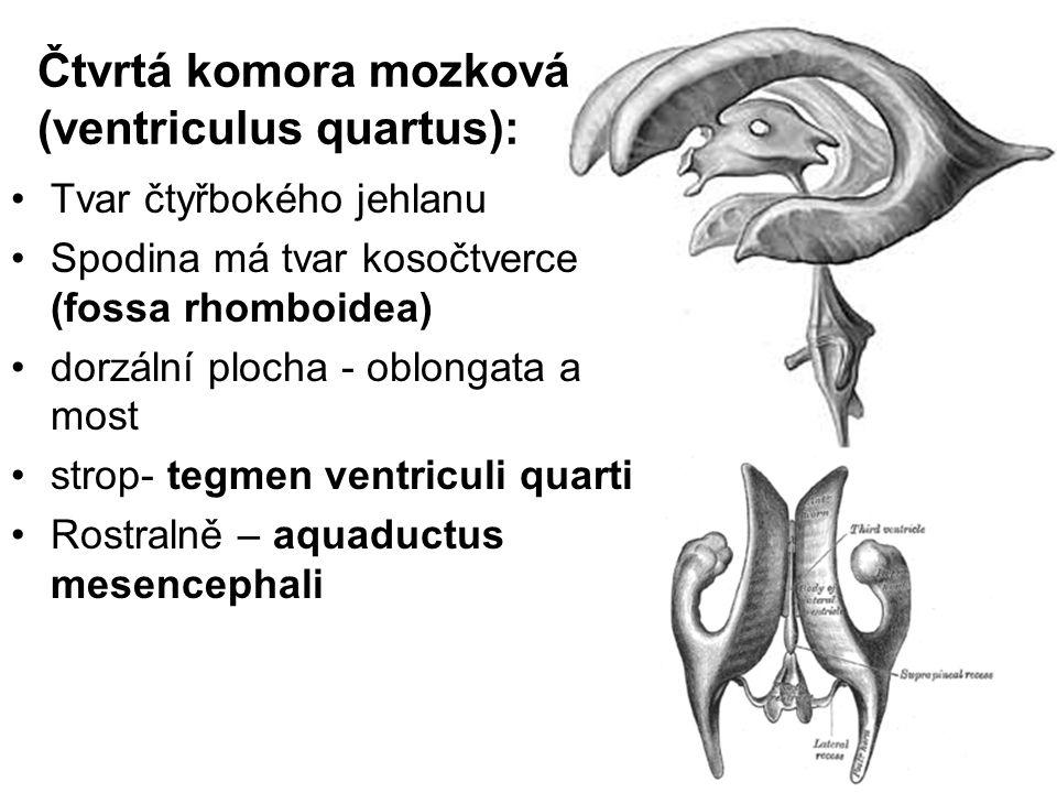 Čtvrtá komora mozková (ventriculus quartus):