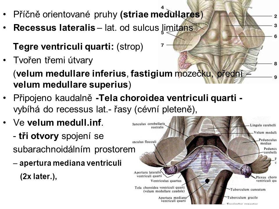 Příčně orientované pruhy (striae medullares)