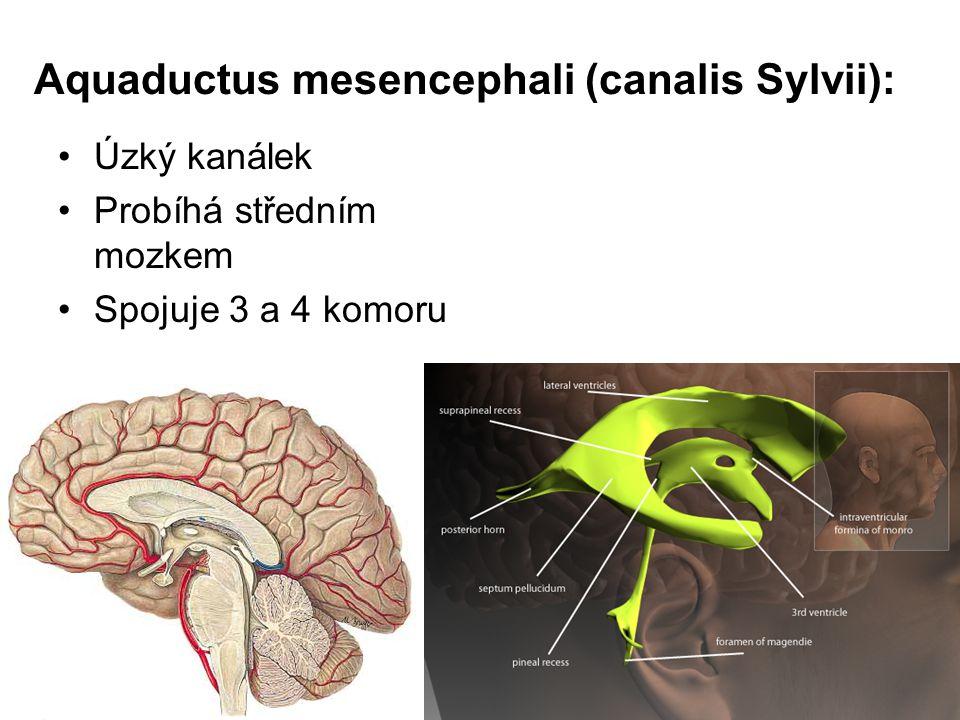 Aquaductus mesencephali (canalis Sylvii):