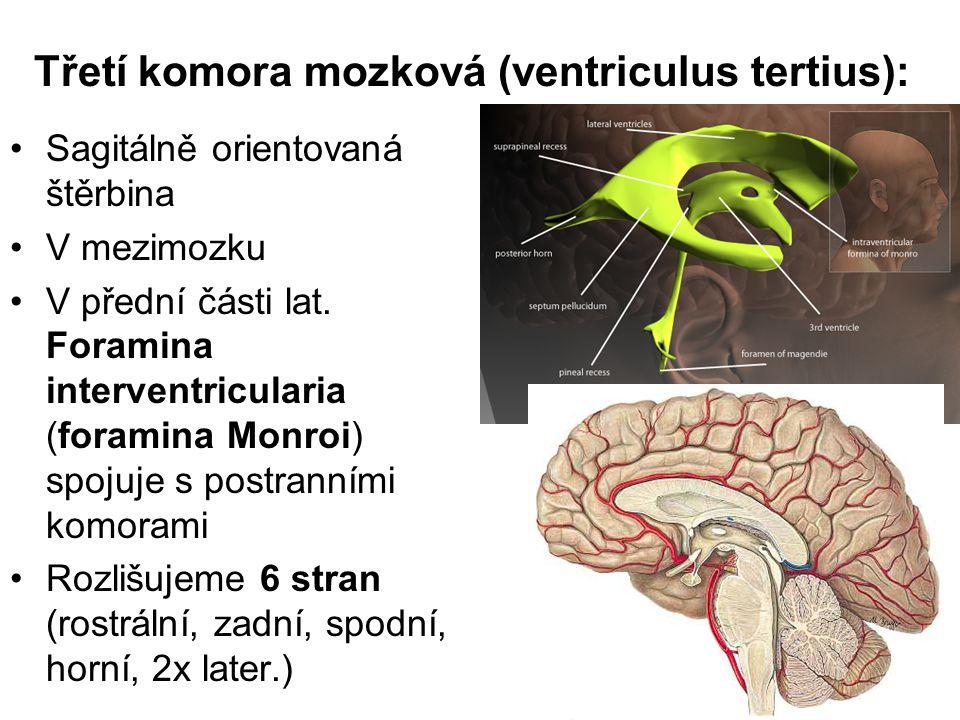 Třetí komora mozková (ventriculus tertius):