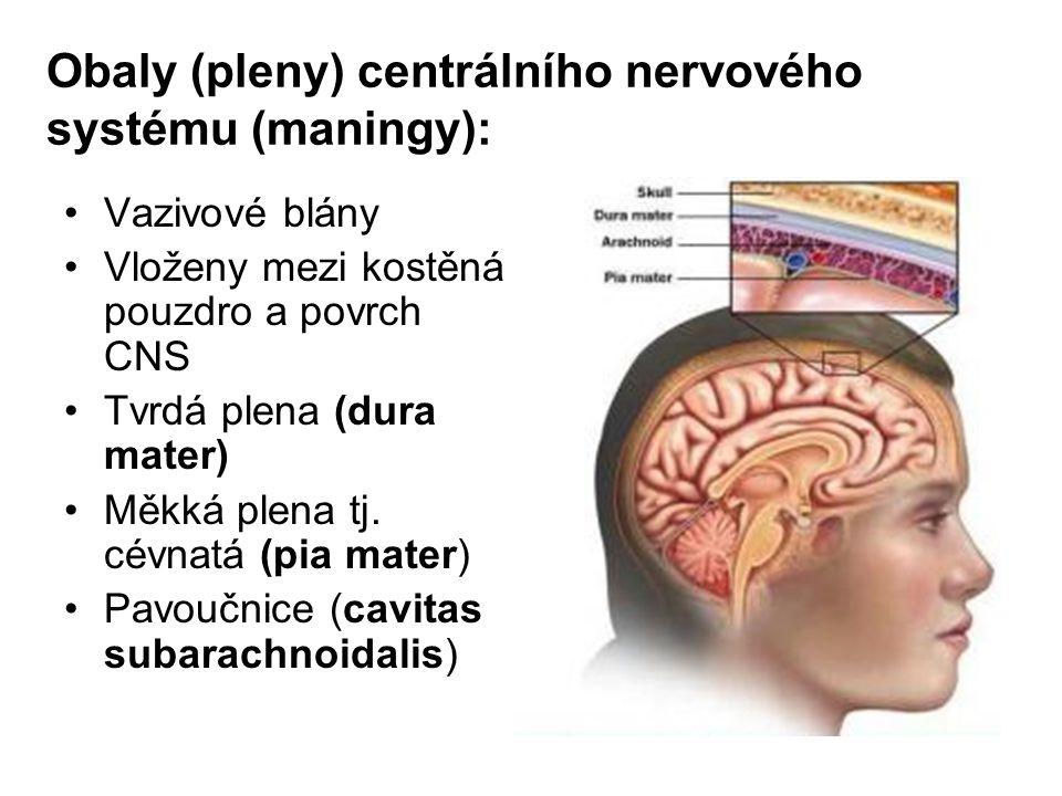 Obaly (pleny) centrálního nervového systému (maningy):