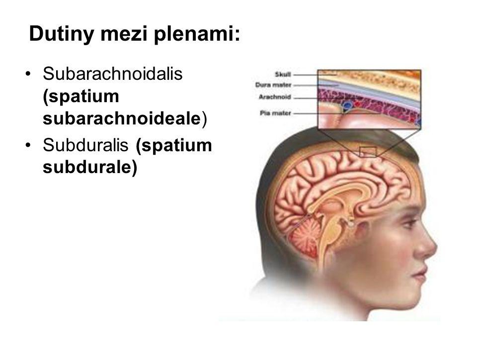 Dutiny mezi plenami: Subarachnoidalis (spatium subarachnoideale)