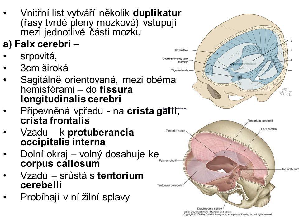 Vnitřní list vytváří několik duplikatur (řasy tvrdé pleny mozkové) vstupují mezi jednotlivé části mozku