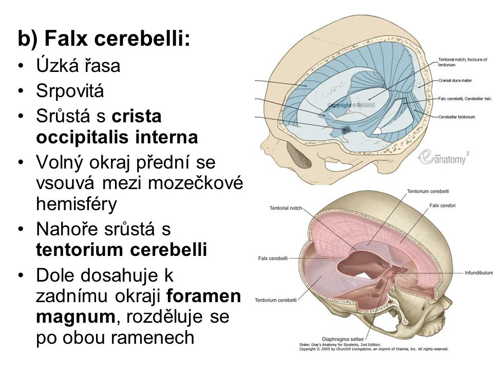 b) Falx cerebelli: Úzká řasa Srpovitá
