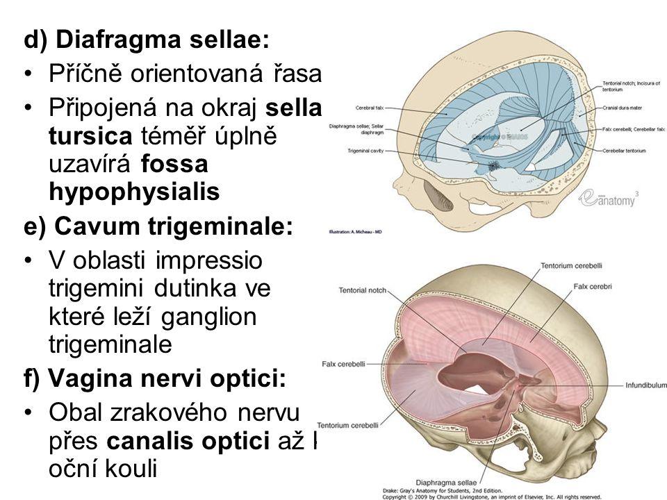 d) Diafragma sellae: Příčně orientovaná řasa. Připojená na okraj sella tursica téměř úplně uzavírá fossa hypophysialis.