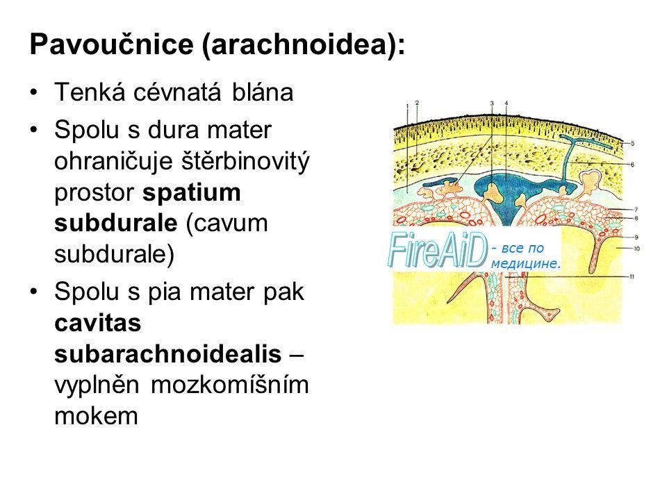 Pavoučnice (arachnoidea):