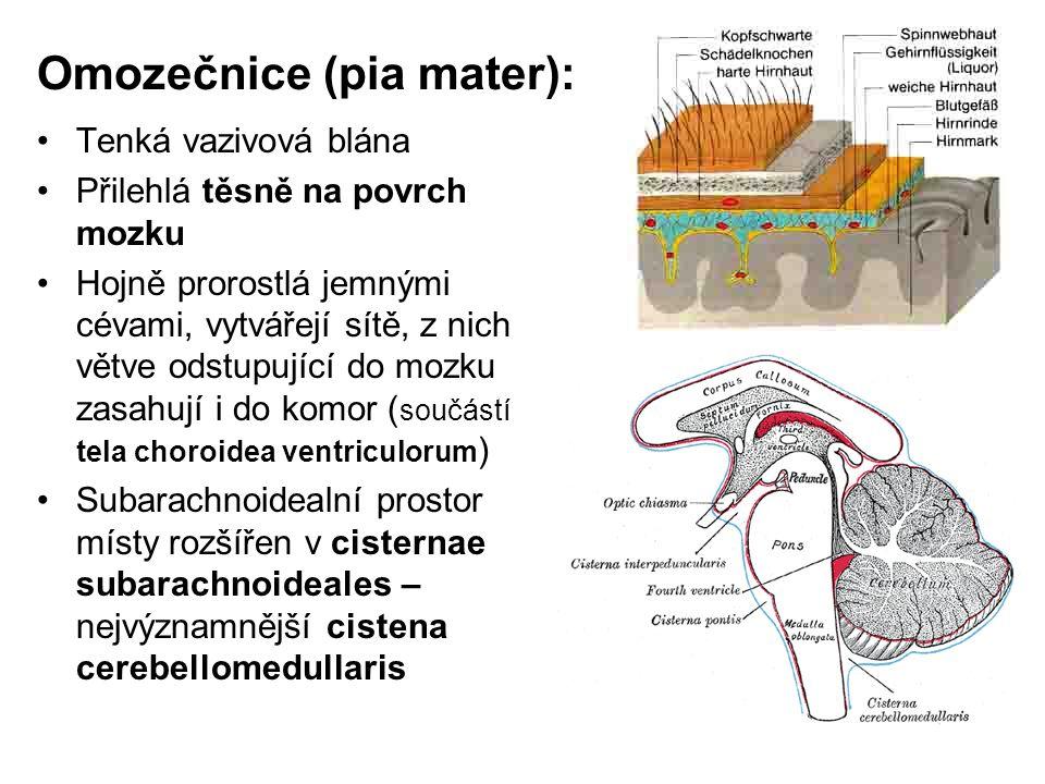Omozečnice (pia mater):
