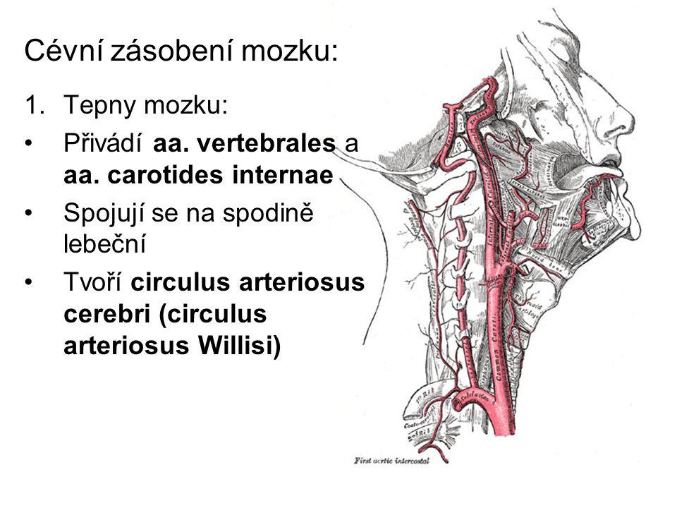 Cévní zásobení mozku: Tepny mozku: