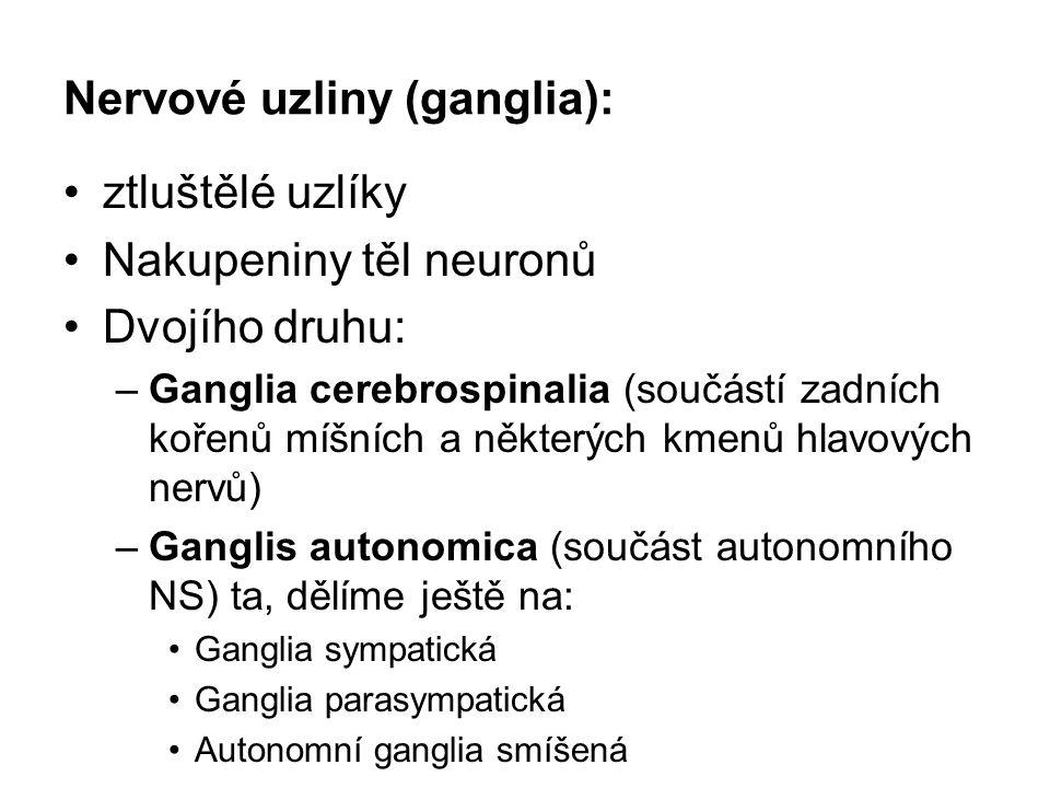 Nervové uzliny (ganglia):