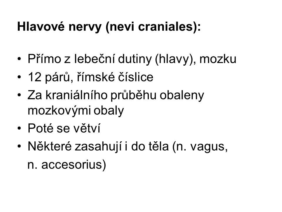 Hlavové nervy (nevi craniales):