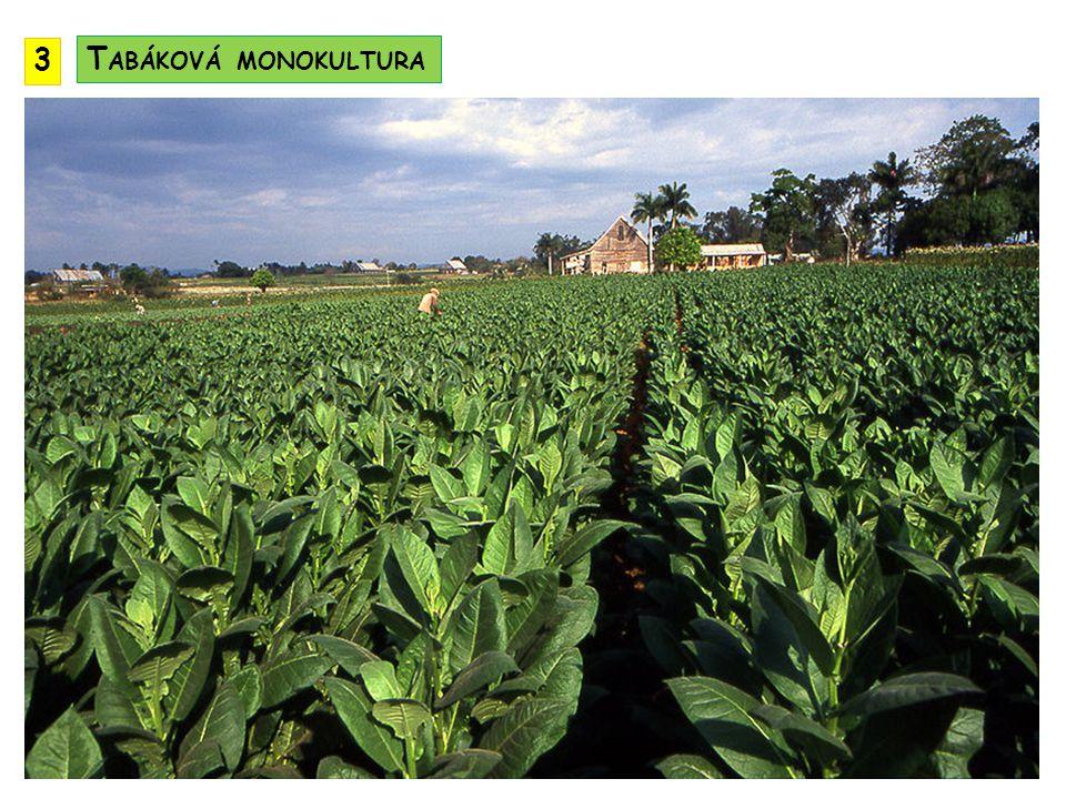 3 Tabáková monokultura