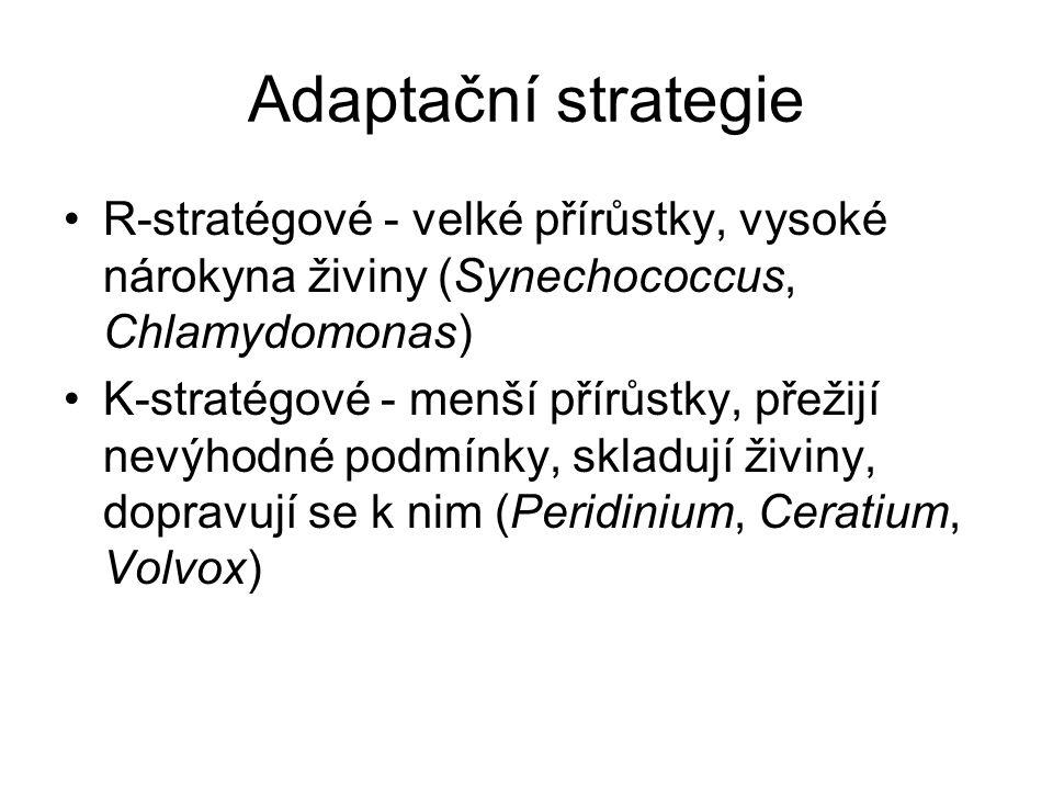 Adaptační strategie R-stratégové - velké přírůstky, vysoké nárokyna živiny (Synechococcus, Chlamydomonas)